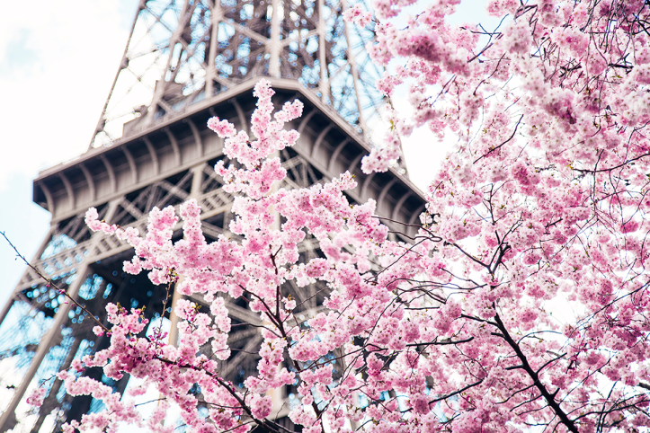 Ambitieuse-Pink-Cherry-Blossoms-in-Paris-photography-by-Ylenia-Cuellar-2B